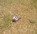 Жители Новомосковска сообщают о массовой гибели птиц