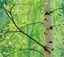 В 2014 году ясногорский городской парк будет благоустроен