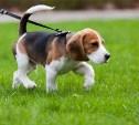В 2015 году в каждом районе Тулы появится площадка для выгула собак