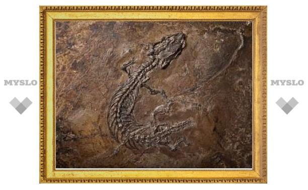 Древние останки решили загадку безногих ящериц