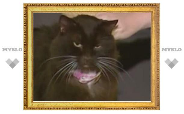 Кошка вернулась к жизни после двух эвтаназий