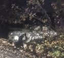 На Веневском шоссе влетела в столб Toyota