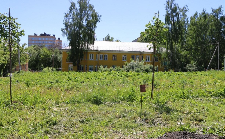 На улице Шухова в Туле появятся фруктовые деревья