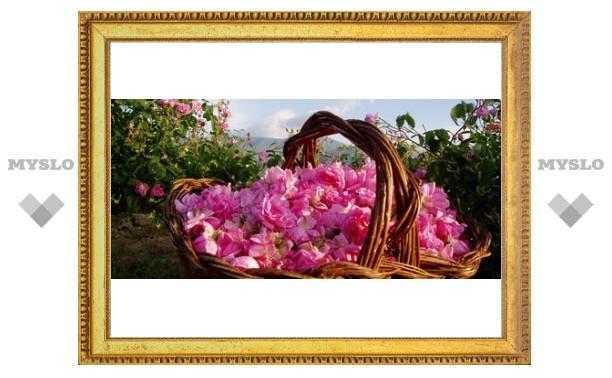 В Туле будут выращивать голландские розы
