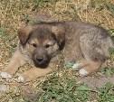 Тульский приют пристроил в добрые руки сто бездомных собак