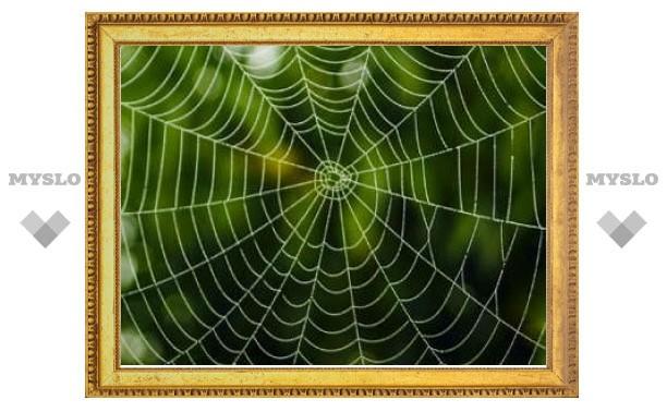 Секрет прочности и эластичности паутины оказался скрыт в блинах