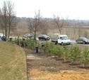 В Мясново высадили 100 сосен