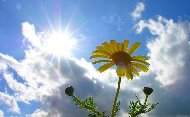 Погода в Туле 11 июля: тепло, ветрено, без осадков