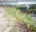 В Баташевском саду в Туле высадили более 500 ирисов