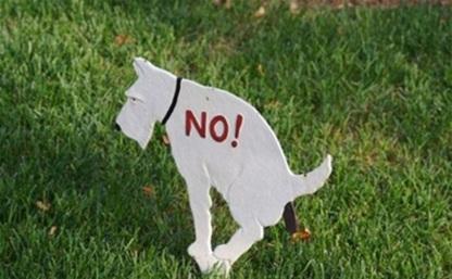 Депутаты запретят собакам гадить в песочницы