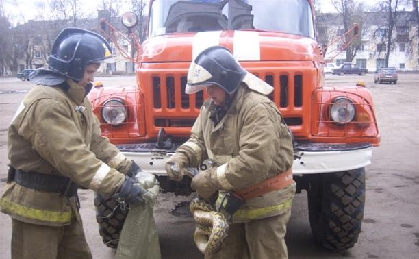 В Кимовске нашли двухметровую змею