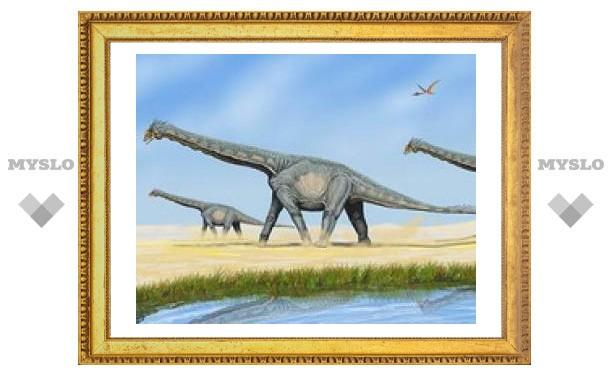Длинношеие динозавры не поднимали головы