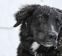 В России заработала горячая линия по защите животных