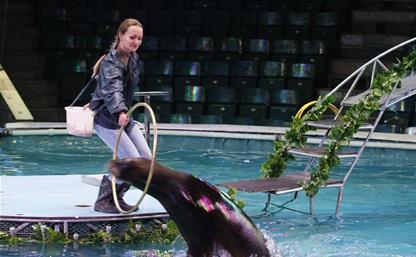 Туляков приглашают на аква-шоу на арене цирка