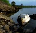 В правительстве Тульской области обсудили негативную экологическую обстановку в регионе