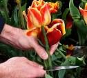 В Щёкино парень избил мужчину за то, что он выкопал цветы в палисаднике
