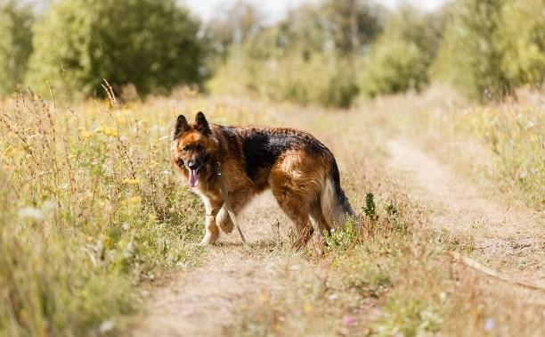 «Зоо Дача»: Собакам тоже нужен отпуск!