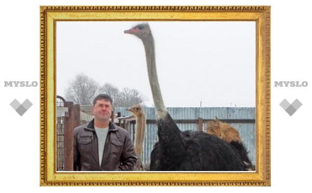 Под Тулой поселились страусы