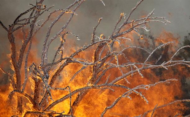 В лесах Тульской области объявлен пожароопасный период