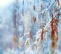 Погода в Туле на выходные: небольшой снег и лёгкие заморозки
