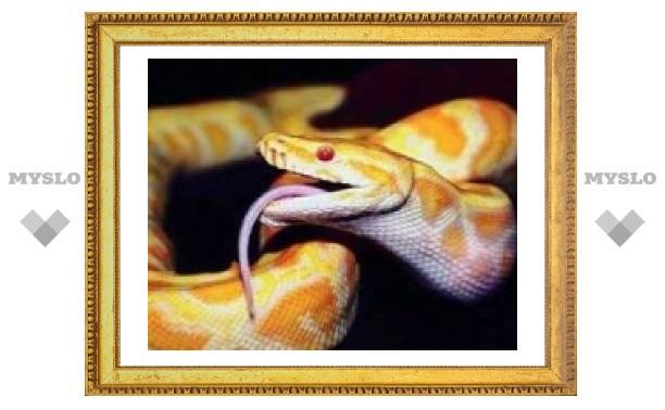 Тулякам покажут самых сильных змей