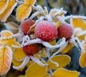 Гидрометцентр России: 17 сентября в столицу придут первые заморозки