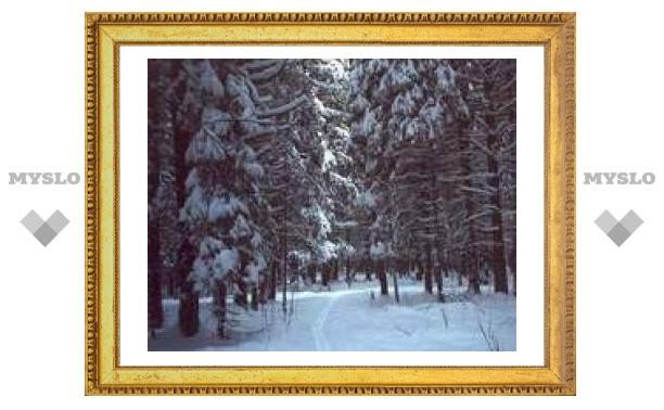 Зимой в Белоусовском парке вырубят 228 деревьев