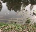 В Веневе демонтированные бетонные столбы сбросили в реку