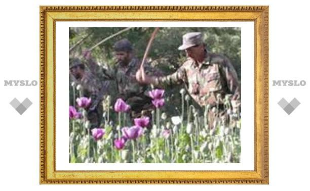 Афганский опиум будут использовать в медицинских целях
