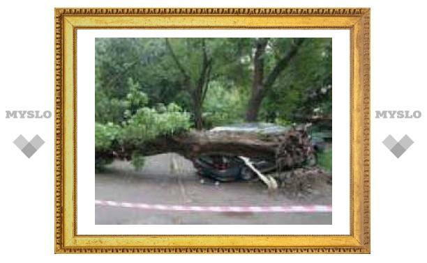 """Дерево отрихтовало """"Ладу"""""""