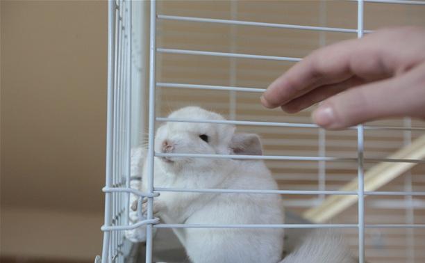 Трогательный зоопарк: радость или жестокость?