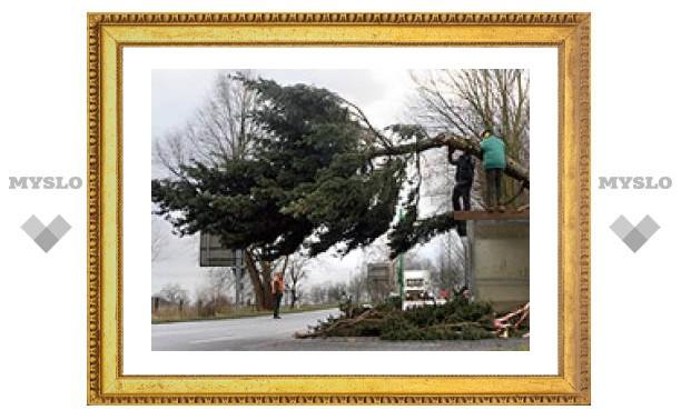 Нас может придавить деревом!