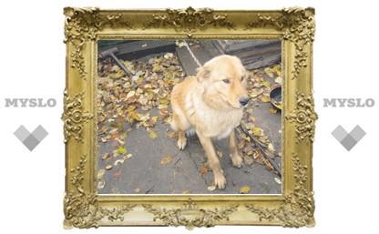 Тулячка Дарья Саутнер: «Мою собаку убили и повесили на заборе!»