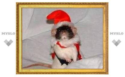 В Туле нашествие Крыс и Мышей!