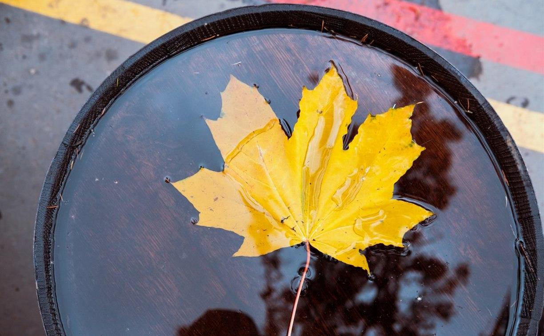 Погода в Туле 18 октября: прохладно, ветрено и дождливо