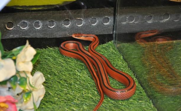 В экзотариуме выбирают королеву красоты среди змей