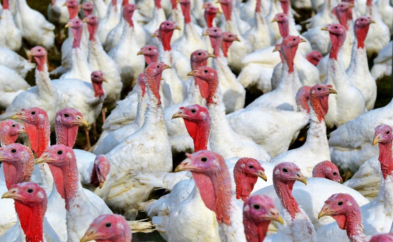 Завод по переработке птичьего помета стал причиной вони в Новомосковске