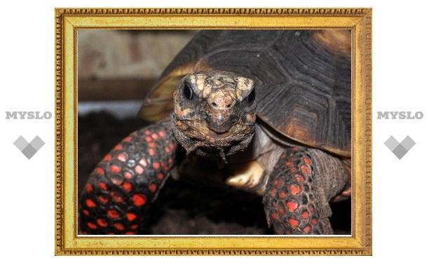 Туляков приглашают в мир черепах