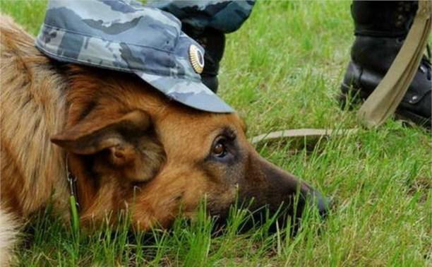 Овчарка Буш раскрыла кражу умывальника в Ясногорске