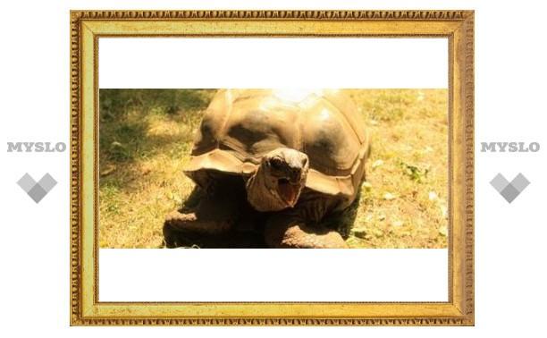 Гигантской черепахе Тулы нашли невесту