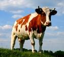 В Одоевском районе полиция задержала похитителя коровы