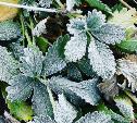 Гидрометцентр: в Туле сегодня ожидается первый снег