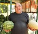 В Туле будут работать 22 точки продаж арбузов и дынь