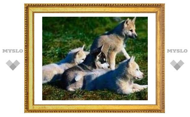 Массовая гибель собак в Туле