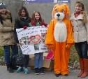 Волонтеры собрали 200 кг корма для бездомных животных