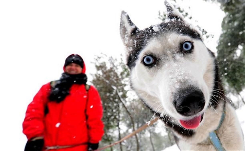 Жителям Привокзального района предлагают выбрать место площадки для выгула собак