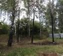 Жители Пролетарского района: «Помогите спасти берёзовую рощу»