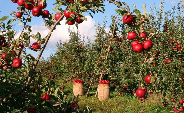 В Тульской области фруктовый вор из-за своей жадности застрял в грязи