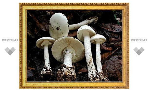 Четверо туляков отравились грибами