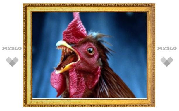 Генно-модифицированные куры победили грипп